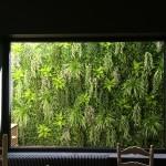 Jardin vertical empresas 6