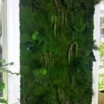 Jardin vertical musgo preservado 5