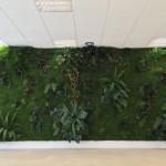Jardin vertical musgo preservado 6