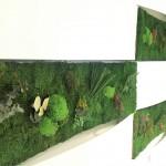 Jardin vertical musgo preservado