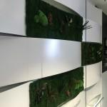 Secciones de musgo preservado